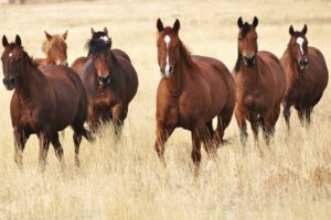 Trout Creek Ranch Mares in Fall