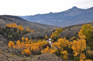 Fall in Trout Creek Basin.  Sheep Mountain in the background.