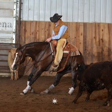 TCR Doctor Playgun (Playgun Chex x A Doc N Pay)  a 2007 chestnut gelding competing in NCHA events