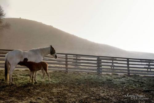 Trout Creek Ranch mare and foal