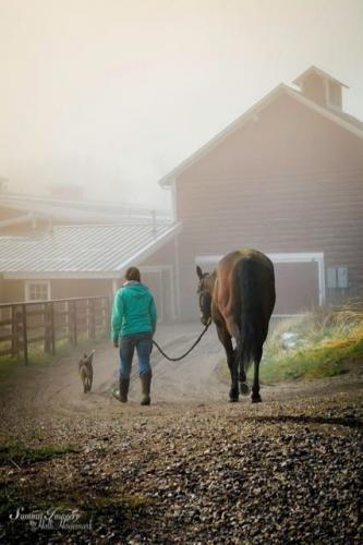 Fog at Trout Creek Ranch barn