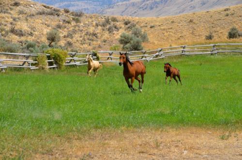 Quarter horses at Trout Creek Ranch